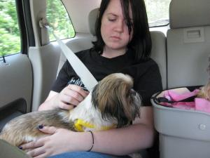 The car ride home from the rescue a.k.a. the day we met.