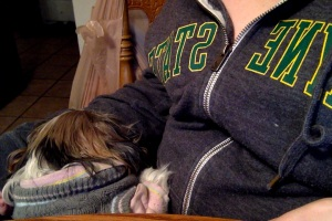 Jules in her comfort zone, my lap, less than a week before we said goodbye.
