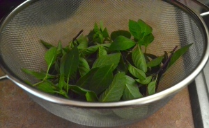 The basil, a mix of blue spice and cinnamon basil, in the colander fresh from the garden.